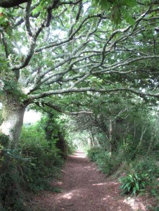 Beautiful footpath walk out of Kingsand.
