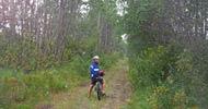Crocus Trail