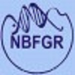 NBFGR Recruitment 2018 Young Professional Senior Research Fellow