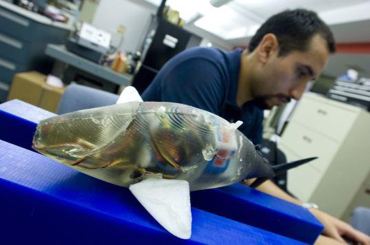 robofish, robot, fish, mit
