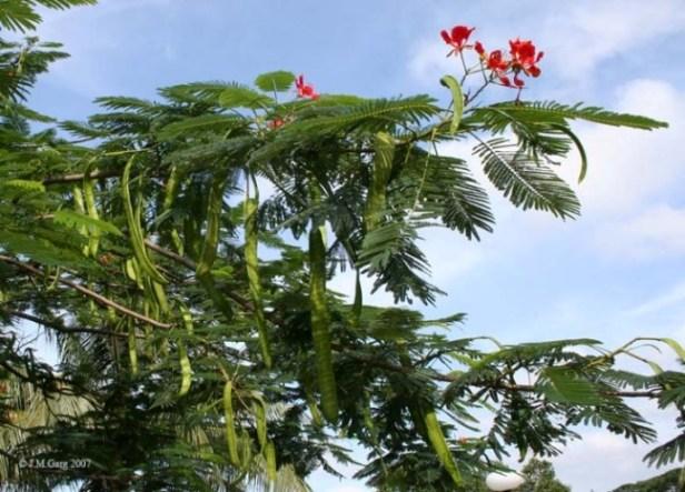 வாதநாராயணன்