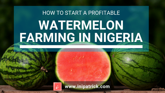 Step by Step Guide to A Profitable Watermelon Farming in Nigeria
