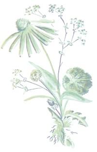 in joy flowers