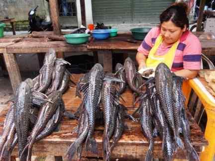 pesci dall'aspetto primordiale venduti al mercato
