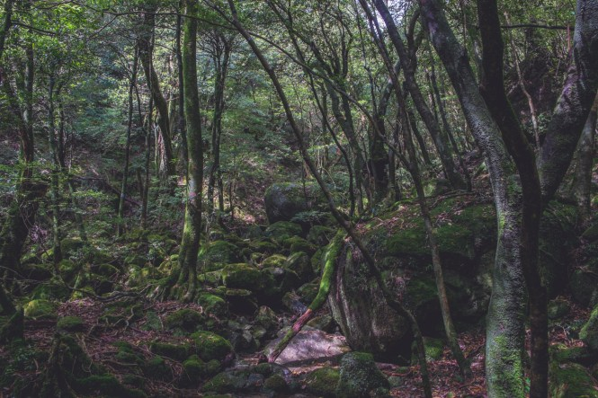 yakushima forest japan hike