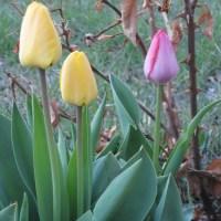 Garden Surprise: Perky Fleurs