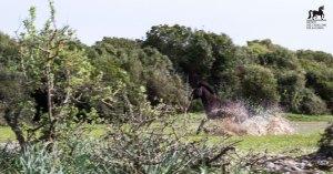 Cavallo al galoppo al Parco della Giara