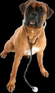 dog_PNG2452