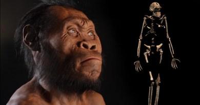 त्यांचे मेंदू सत्र्यांच्या आकाराएवढे होते म्हणे, शोध लागलाय एका नव्या मानवी प्रजातीचा !