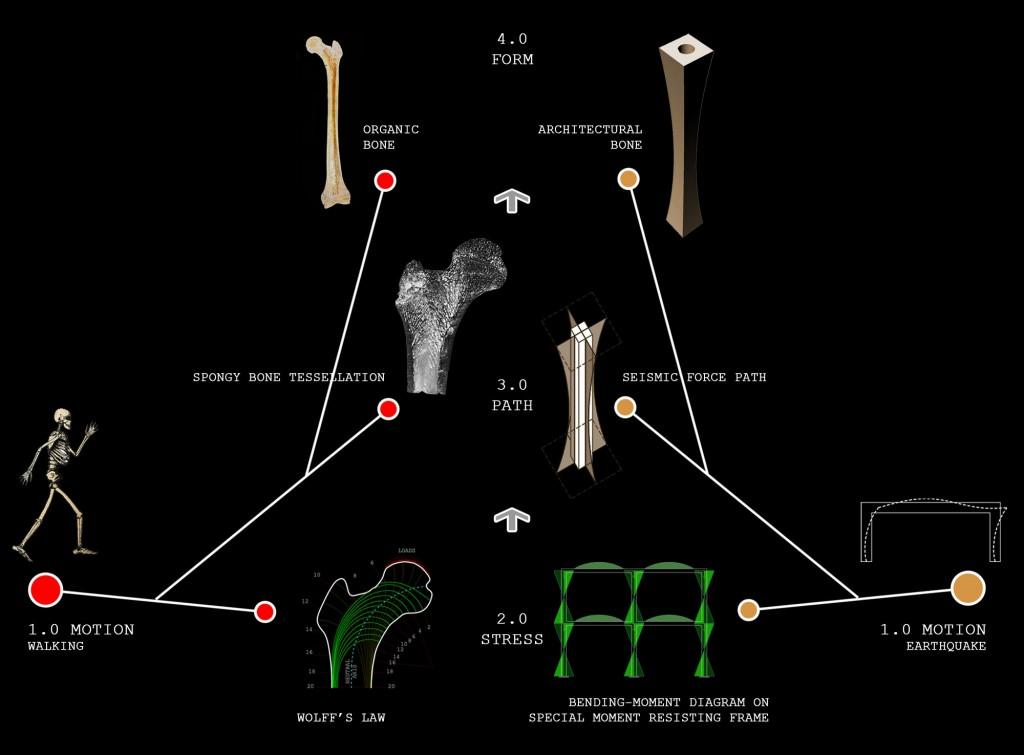 03 BiomimeticAlgorithm