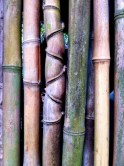 Material Intelligence, bamboo. Image: www.minsooarc.com