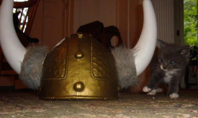 Viking kitten