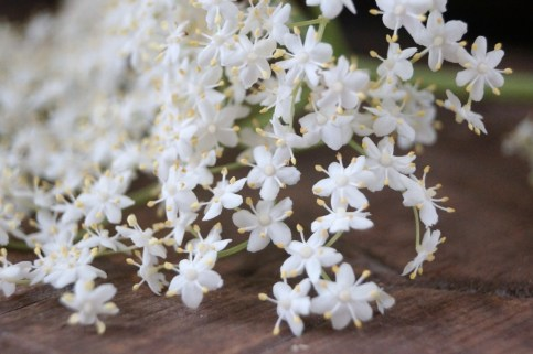 Elderflowers, close up