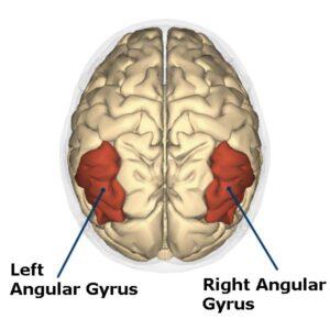 Angular Gyrus