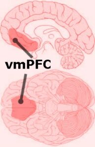 vmPFC of Brain
