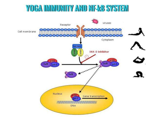 Yoga and Immunity