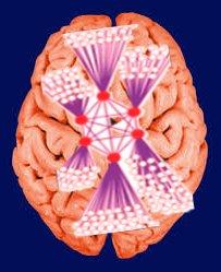 rich-club-brain-meditation