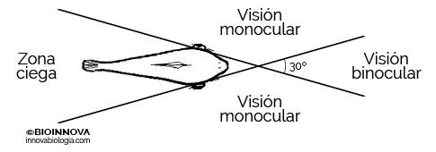 Ángulo de visión de una trucha