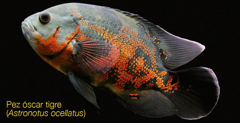El intercambio gaseoso en peces – BIOINNOVA