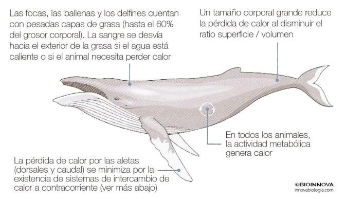 Termorregulación en animales