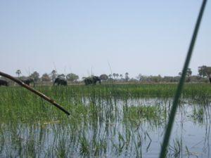 Elephants in the Okavango Delta seen from a ma...