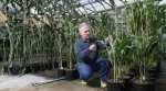 Dwarf plants could reduce demands for water, fertilizer, nutrients and pesticides