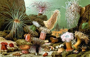 The next wave of insecticides: Venom of sea anemones