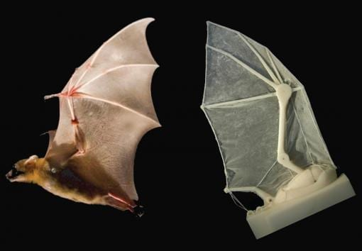Brown researchers build robotic bat wing