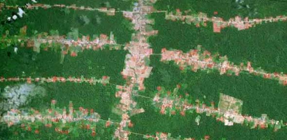 forest-clearing-along-roads-in-the-southern-brazilian-amazon-in-rondonia-credit-google-earth