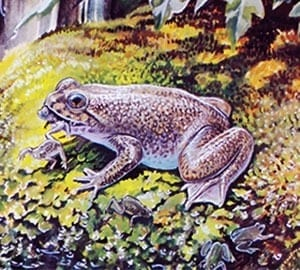 Scientists produce cloned embryos of extinct frog