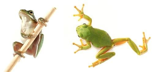 Frog-like robot will help surgeons