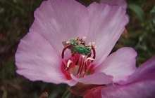 Pre-war insect hunters help to save our pollinators