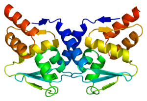 Protein_BCL6_PDB_1r28