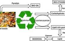 Wasted Energy: Converting Discarded Food into Biofuels Promises Global Energy Boon