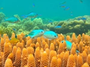 Fish living near the equator will not thrive in the warmer oceans of the future