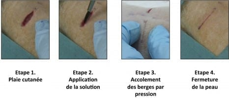 """Phase 1 Skin injury Phase 2 Application of the solution Phase 3 Using pressure to hold the edges together Phase 4 Skin closure Illustration of the first experiment conducted by the resear chers on rats: a deep wound is repaired by applying the aqueous nanoparticle solution. The wound closes in thirty seconds. © """"Matière Molle et Chimie"""" Laboratory (CNRS/ESPCI Paris Tech)"""