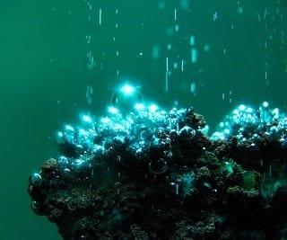 Hydrogen Bubbles (Photo credit: Paul's Lab)