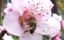 Study strengthens link between neonicotinoids and collapse of honey bee colonies