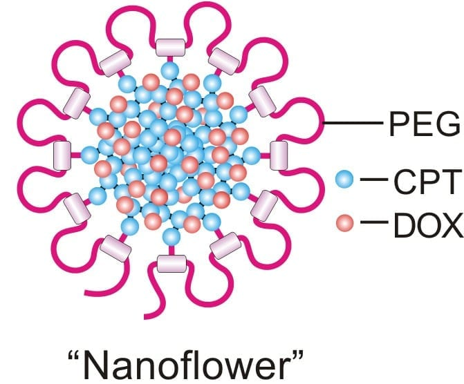 "Early tests of the ""nanodaisy"" drug delivery technique show promise against a number of cancers. Image credit: Ran Mo."