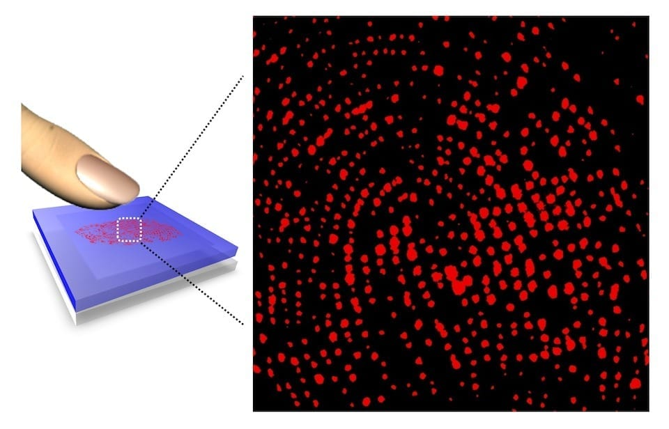 Sweat pore imaging on a fingertip with a hydrochromic sensor film. Credit: Kim et al