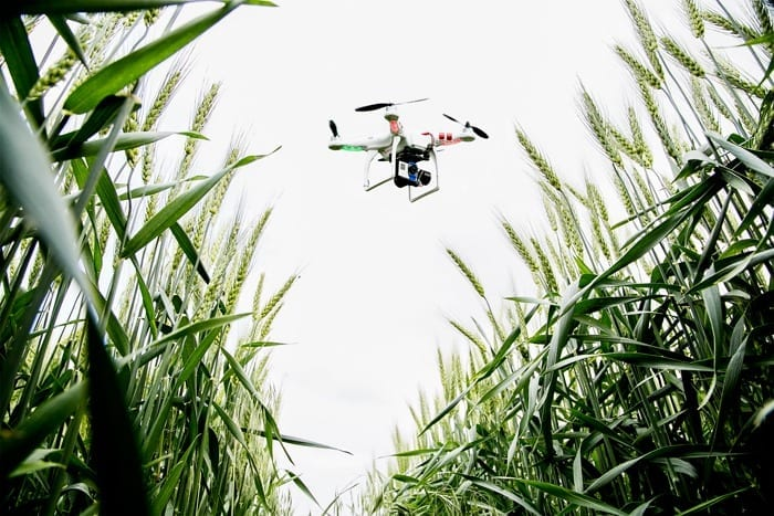Photo by L. Brian Stauffer Drones – unmanned aerial vehicles – scout wheat on the university's South Farms.
