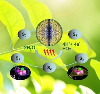 The Oxygen-Evolving Complex (OEC) of PS II cycles through five states, S0 to S4, where four electrons are sequentially extracted from the OEC in four light–driven, charge-separation events. The black ellipses show snapshots of the metal cluster observed in this study. Photo by: Mary Zhu