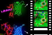 """Molecular movie"" technology will enable extraordinary gains in bioimaging, health research"