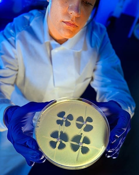 "A CDC microbiologist holds up a plate used to identify resistance in bacteria known as Enterobacteriaceae. Bacteria that are resistant to carbapenems, considered ""last resort"" antibiotics, produce a distinctive clover-leaf shape on the plate."