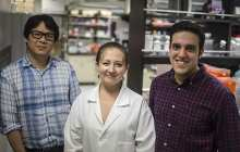Human skin cells reprogrammed directly into brain cells
