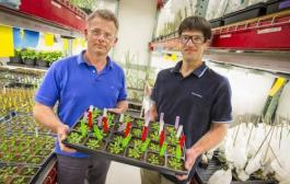 Lab breakthrough can lead to cheaper biofuels, improved crops, and new products from plants