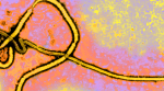 UTMB researchers develop Ebola vaccine effective in a single dose