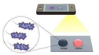 Florida Atlantic University Researchers have employed three different paper and flexible material-based platforms incorporated with electrical and optical sensing modalities. Using this same technology, they have developed a phone app that can use a drop of blood to detect bacteria and disease in the blood using images from a cell phone, which could easily be analyzed from anywhere in the world.