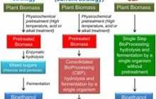 Microbe Produces Ethanol from Switchgrass Without Pretreatment
