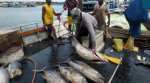 Fisherfolk, communities need more than healthy fish stocks